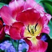 The Beauty Of Flowers Art Print
