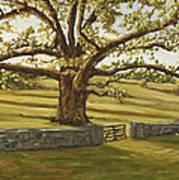 The Bedford Oak Summer Art Print