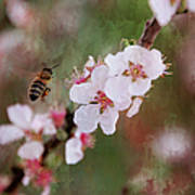The Bee In The Cherry Tree Art Print
