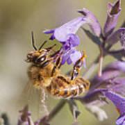 The Bee's Knees Art Print