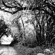 The Bend In The Road Bw Art Print