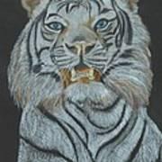 The Bengal Art Print