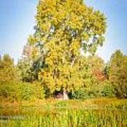 The Big Autumn Poplar Art Print