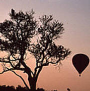 The Bird And The Balloon Art Print