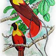 The Birds Of Paradise Art Print