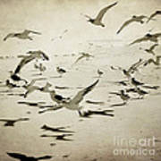 The Birds Art Print by Sharon Coty