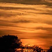 The Birds Still Fly Art Print