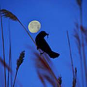 The Blackbird And The Moon Art Print
