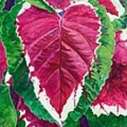 The Bleeding Heart Art Print