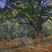 The Bodmer Oak Art Print