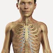 The Bones Within The Body Pre-adolescent Art Print