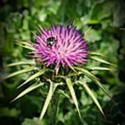 The Bug And The Thistle Art Print