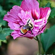 the Bumble Bee Art Print