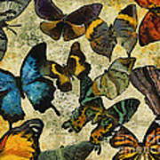 The Butterfly Collection #1 Art Print
