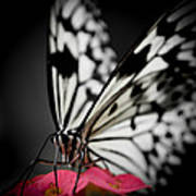 The Butterfly Emerges Art Print