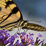 The Butterfly Art Print by Lori Tambakis