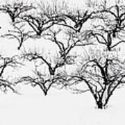 The Calligraphy Of Apple Trees In Winter Art Print
