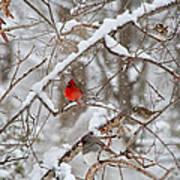 The Cardinal Rules Art Print