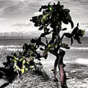 The Catus Tree Siesta Key Florida Art Print