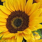 The Color Of Summer - Sunflower Art Print