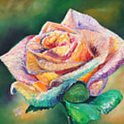 The Colors Of A Rose Art Print