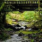 The Coming Of Autumn - Barnes Creek - Lake Crescent - Washington Art Print