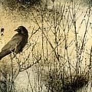 The Common Crow Art Print