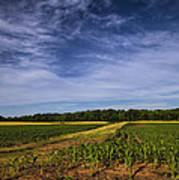 The Corn Fields Of Alabama Art Print