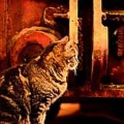 The Crane Yard Cat Art Print