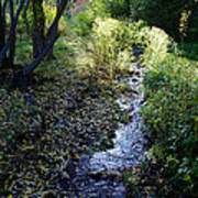 The Creek At Finch Arboretum Art Print