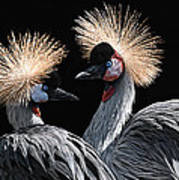 The Crowned Cranes Art Print