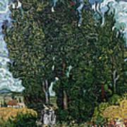 The Cypresses Art Print