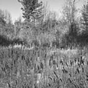 The Dance Of The Cattails Bw Art Print