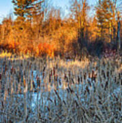 The Dance Of The Cattails Art Print