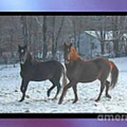 The Dancing Paso Fino Stallions Art Print
