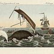 The Dangers Of Whale Fishing Art Print