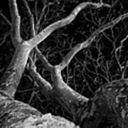 The Dark And The Tree 2 Art Print by Fabio Giannini