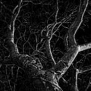 The Dark And The Tree Art Print