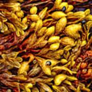 The Daughter Of The Sea's Bright Carpet Art Print