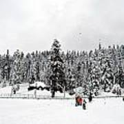 The Dazzle Of Winter Trees At Gulmarg - Kashmir- India- Viator's Agonism Art Print