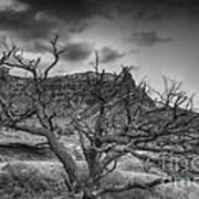 The Dead Pinion Tree Hdr Bw Art Print