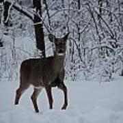 The Deer In The Snow Art Print