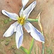 The Delicate Autumn Lady - Narcissus Serotinus Art Print