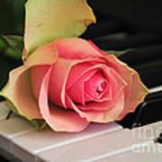 The Delicate Rose Art Print