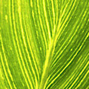 The Detail Of Plant Leaf, Salt Lake Art Print