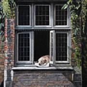 The Dog of Bruges Art Print