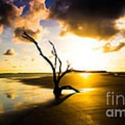 The Driftwood Tree Folly Beach Art Print