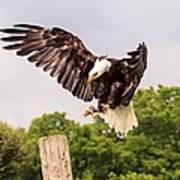 The Eagle Is Landing Art Print