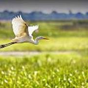 The Egret In Flight Series V3 Art Print