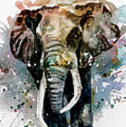 The Elephant Art Print by Steven Ponsford